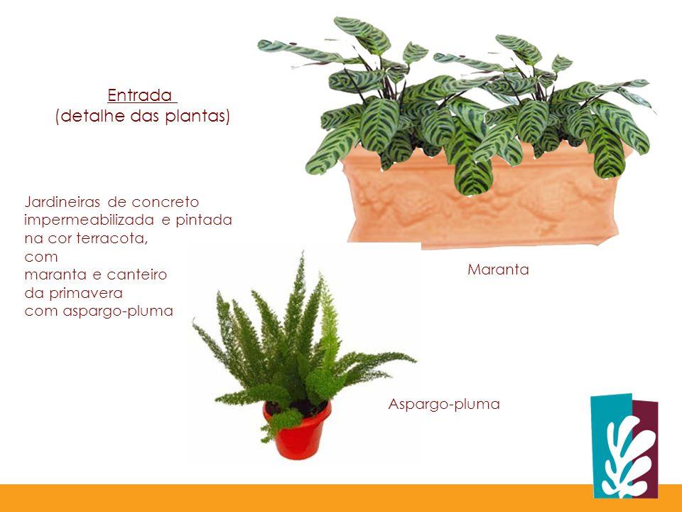 Entrada (detalhe das plantas) Jardineiras de concreto impermeabilizada e pintada na cor terracota, com maranta e canteiro da primavera com aspargo-pluma Maranta Aspargo-pluma