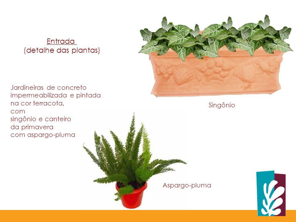 Singônio Aspargo-pluma Jardineiras de concreto impermeabilizada e pintada na cor terracota, com singônio e canteiro da primavera com aspargo-pluma Entrada (detalhe das plantas)