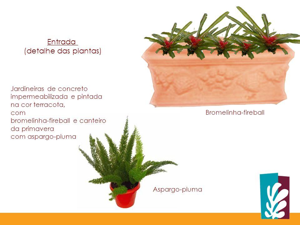 Bromelinha-fireball Aspargo-pluma Jardineiras de concreto impermeabilizada e pintada na cor terracota, com bromelinha-fireball e canteiro da primavera com aspargo-pluma Entrada (detalhe das plantas)