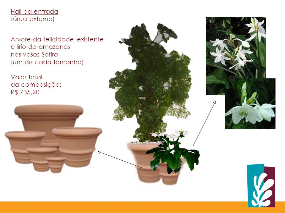 Árvore-da-felicidade existente e lírio-do-amazonas nos vasos Safira (um de cada tamanho) Valor total da composição: R$ 735,20 Hall da entrada (área externa)