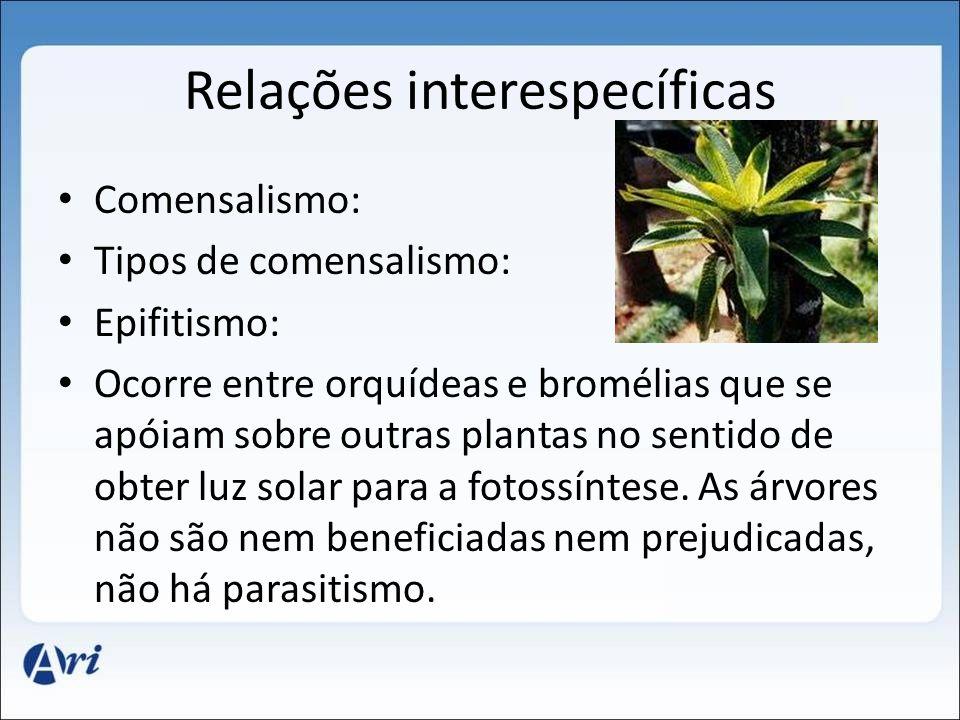 Relações interespecíficas Comensalismo: Tipos de comensalismo: Epifitismo: Ocorre entre orquídeas e bromélias que se apóiam sobre outras plantas no sentido de obter luz solar para a fotossíntese.
