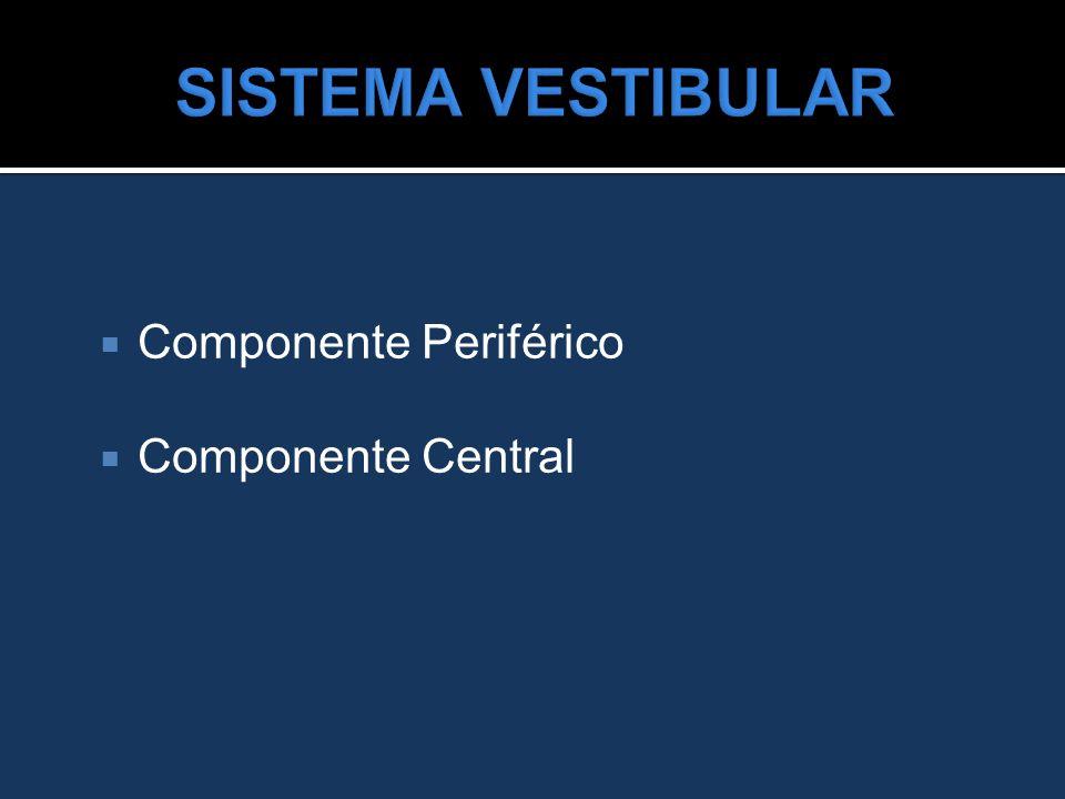  Componente Periférico  Componente Central