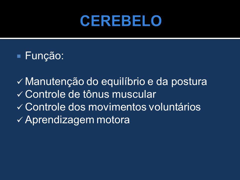  Função: Manutenção do equilíbrio e da postura Controle de tônus muscular Controle dos movimentos voluntários Aprendizagem motora