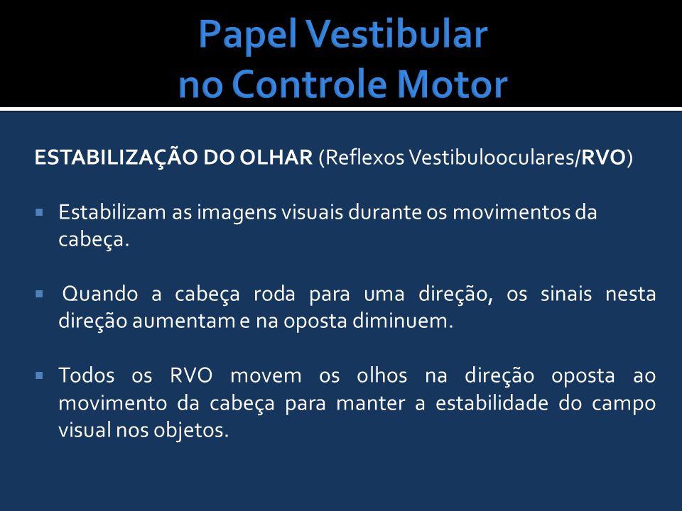 ESTABILIZAÇÃO DO OLHAR (Reflexos Vestibulooculares/RVO)  Estabilizam as imagens visuais durante os movimentos da cabeça.  Quando a cabeça roda para