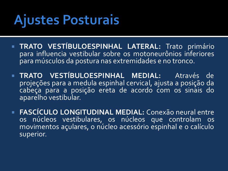  TRATO VESTÍBULOESPINHAL LATERAL: Trato primário para influencia vestibular sobre os motoneurônios inferiores para músculos da postura nas extremidad