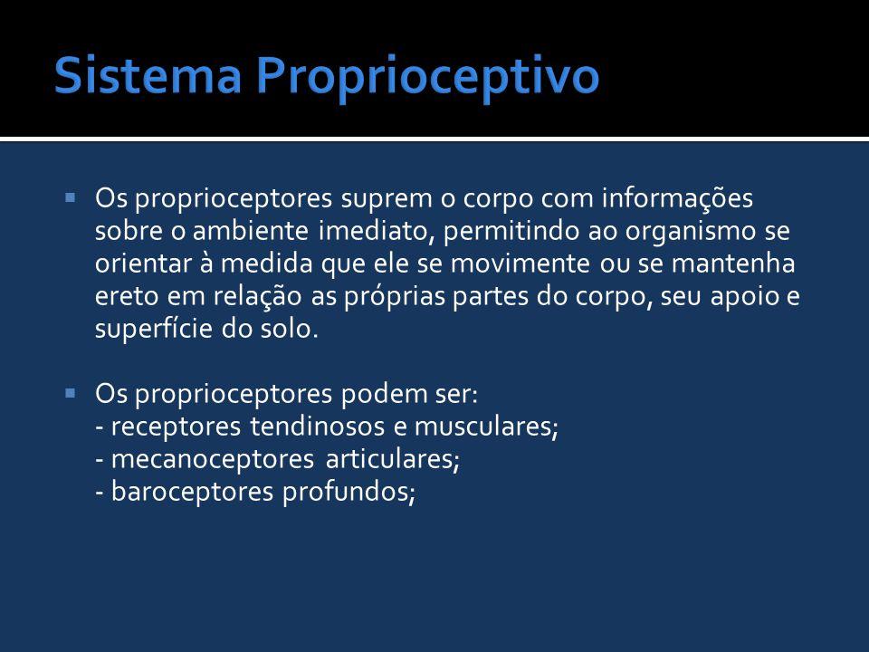  Os proprioceptores suprem o corpo com informações sobre o ambiente imediato, permitindo ao organismo se orientar à medida que ele se movimente ou se
