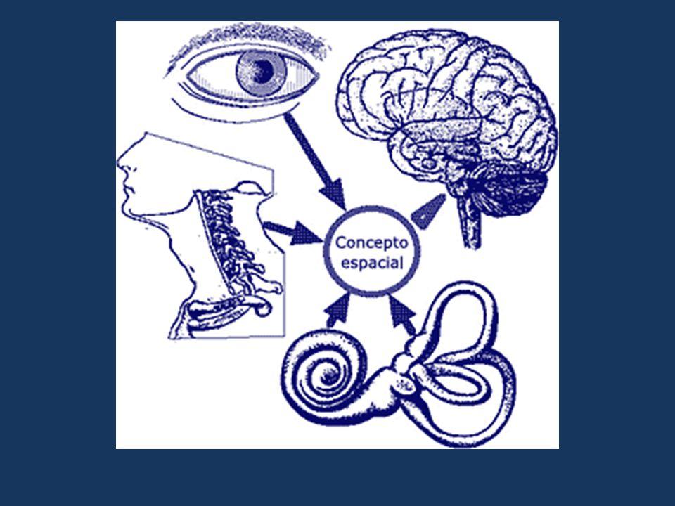  Vertigem subjetiva: sensação de estar girando no meio ambiente  Vertigem objetiva: sensação de que os objetos giram ao seu redor