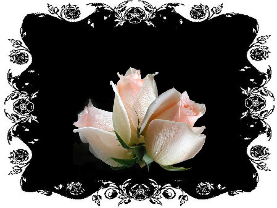 Flores para você! Aceite-as, mesmo que sejam virtuais.
