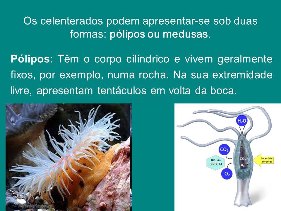 Os celenterados podem apresentar-se sob duas formas: pólipos ou medusas. Pólipos: Têm o corpo cilíndrico e vivem geralmente fixos, por exemplo, numa r