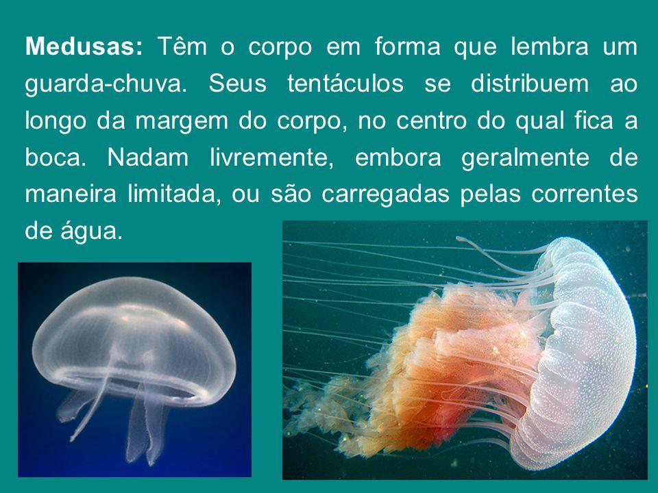 Corais: Organizam-se me colônias de pequenos pólipos que fabricam um exoesqueleto ou esqueleto externo calcário.