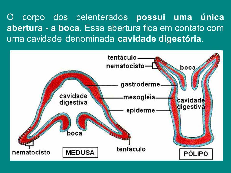 O corpo dos celenterados possui uma única abertura - a boca. Essa abertura fica em contato com uma cavidade denominada cavidade digestória.