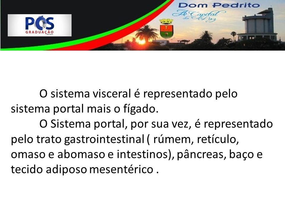 O sistema visceral é representado pelo sistema portal mais o fígado. O Sistema portal, por sua vez, é representado pelo trato gastrointestinal ( rúmem