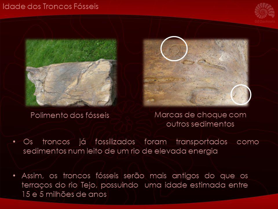 Estes troncos e outros partilham as características de uma mesma árvore atribuída a Annonoxylon teixeirae, cuja representante actual mais conhecida é a Anoneira Em que regiões do mundo há anoneiras actualmente.