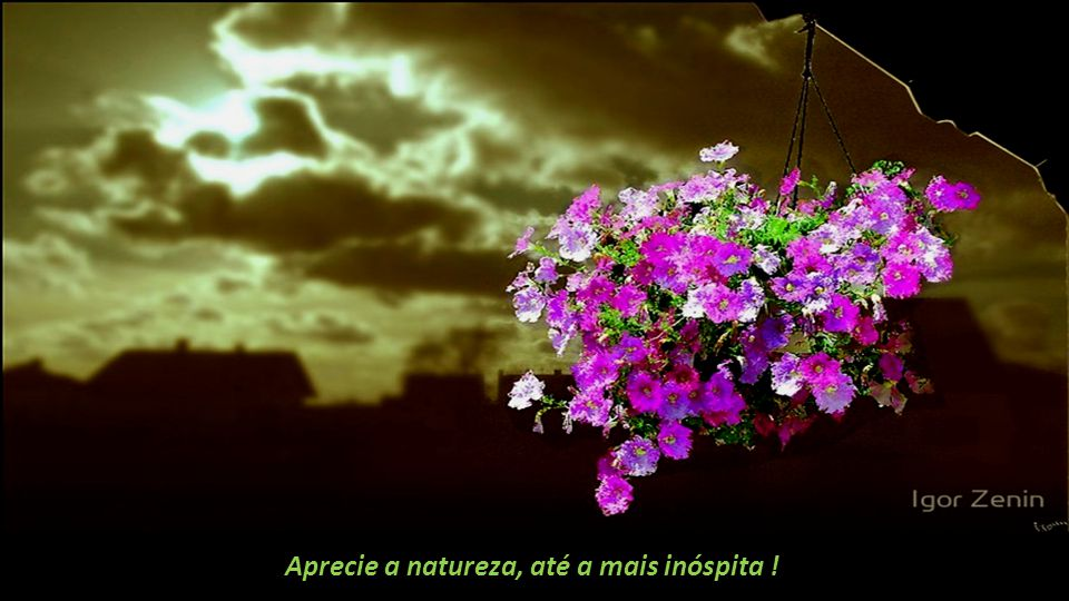 Aprecie a natureza, até a mais inóspita !