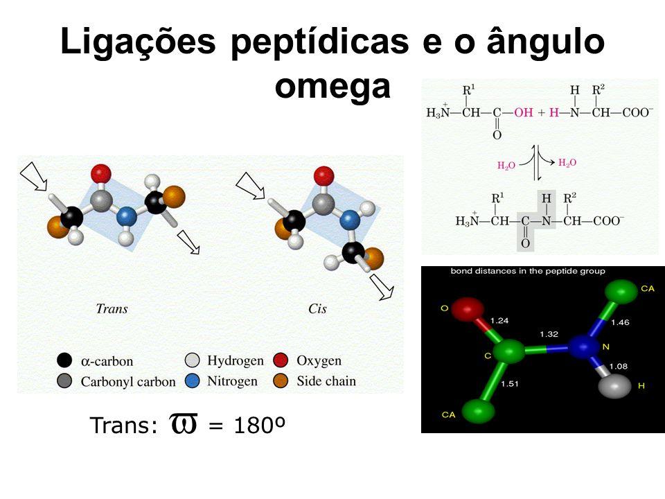 Ligações peptídicas e o ângulo omega Trans:  = 180º