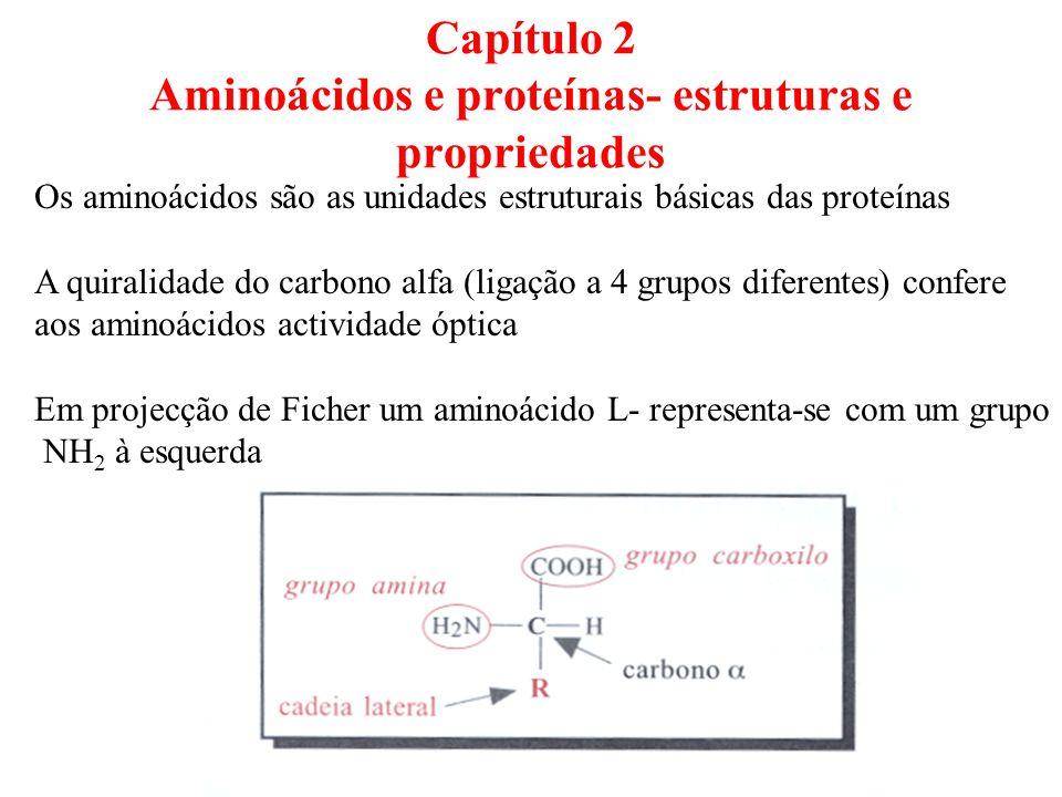 Capítulo 2 Aminoácidos e proteínas- estruturas e propriedades Os aminoácidos são as unidades estruturais básicas das proteínas A quiralidade do carbono alfa (ligação a 4 grupos diferentes) confere aos aminoácidos actividade óptica Em projecção de Ficher um aminoácido L- representa-se com um grupo NH 2 à esquerda