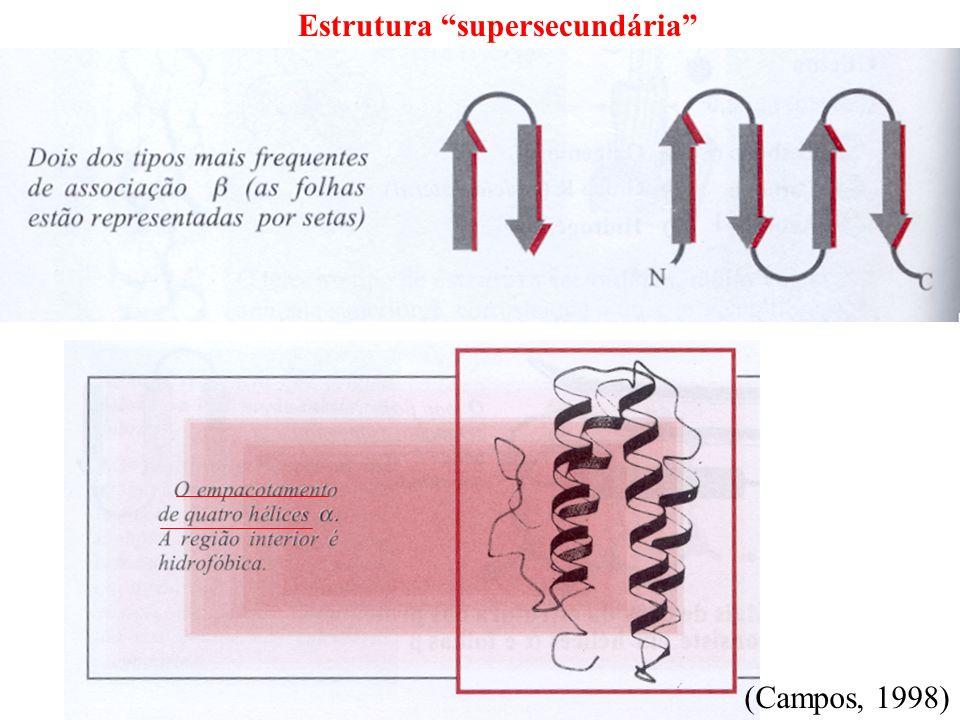 Estrutura supersecundária (Campos, 1998)