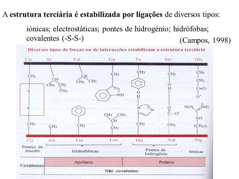 A estrutura terciária é estabilizada por ligações de diversos tipos: iónicas; electrostáticas; pontes de hidrogénio; hidrófobas; covalentes (-S-S-) (Campos, 1998)