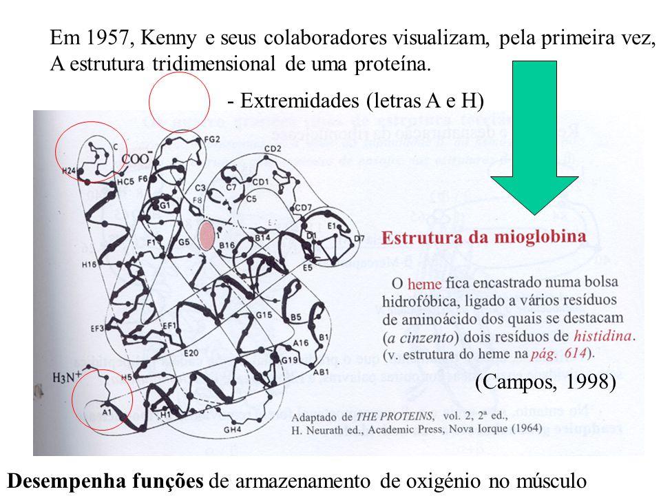 Em 1957, Kenny e seus colaboradores visualizam, pela primeira vez, A estrutura tridimensional de uma proteína.