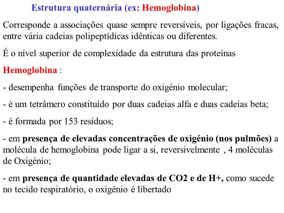 Estrutura quaternária (ex: Hemoglobina) Corresponde a associações quase sempre reversíveis, por ligações fracas, entre vária cadeias polipeptídicas idênticas ou diferentes.
