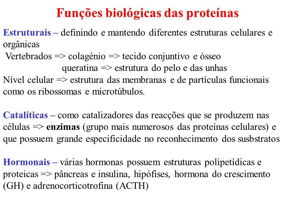 Funções biológicas das proteínas Estruturais – definindo e mantendo diferentes estruturas celulares e orgânicas Vertebrados => colagénio => tecido conjuntivo e ósseo queratina => estrutura do pelo e das unhas Nível celular => estrutura das membranas e de partículas funcionais como os ribossomas e microtúbulos.