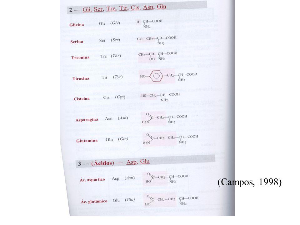 Classificação das proteínas em função da composição Holoproteínas – constituídas apenas por aminoácidos Heteroproteínas- constituídas por uma ou mais cadeias peptídicas e por uma parte não proteica designada de grupo prostético fosfoproteínas nucleoproteínascromoproteínas glicoproteínas lipoproteínas