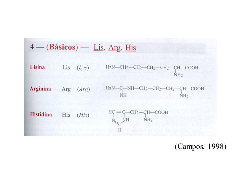mioglobina hemoglobina imunoglobinas muitas enzimas ribonuclease insulina lisozima (Campos, 1998)