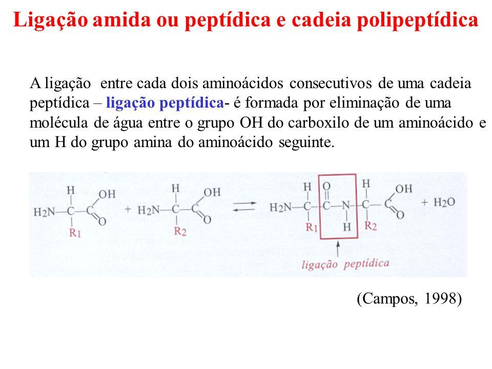 Ligação amida ou peptídica e cadeia polipeptídica A ligação entre cada dois aminoácidos consecutivos de uma cadeia peptídica – ligação peptídica- é formada por eliminação de uma molécula de água entre o grupo OH do carboxilo de um aminoácido e um H do grupo amina do aminoácido seguinte.