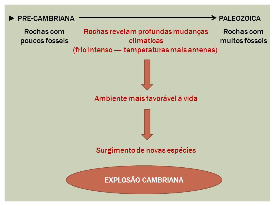 ► PRÉ-CAMBRIANA PALEOZOICA Rochas com poucos fósseis Rochas com muitos fósseis Rochas revelam profundas mudanças climáticas (frio intenso → temperatur