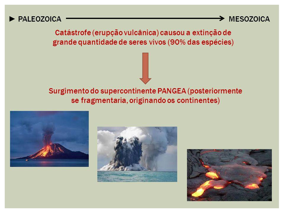 ► PALEOZOICA MESOZOICA Catástrofe (erupção vulcânica) causou a extinção de grande quantidade de seres vivos (90% das espécies) Surgimento do supercont