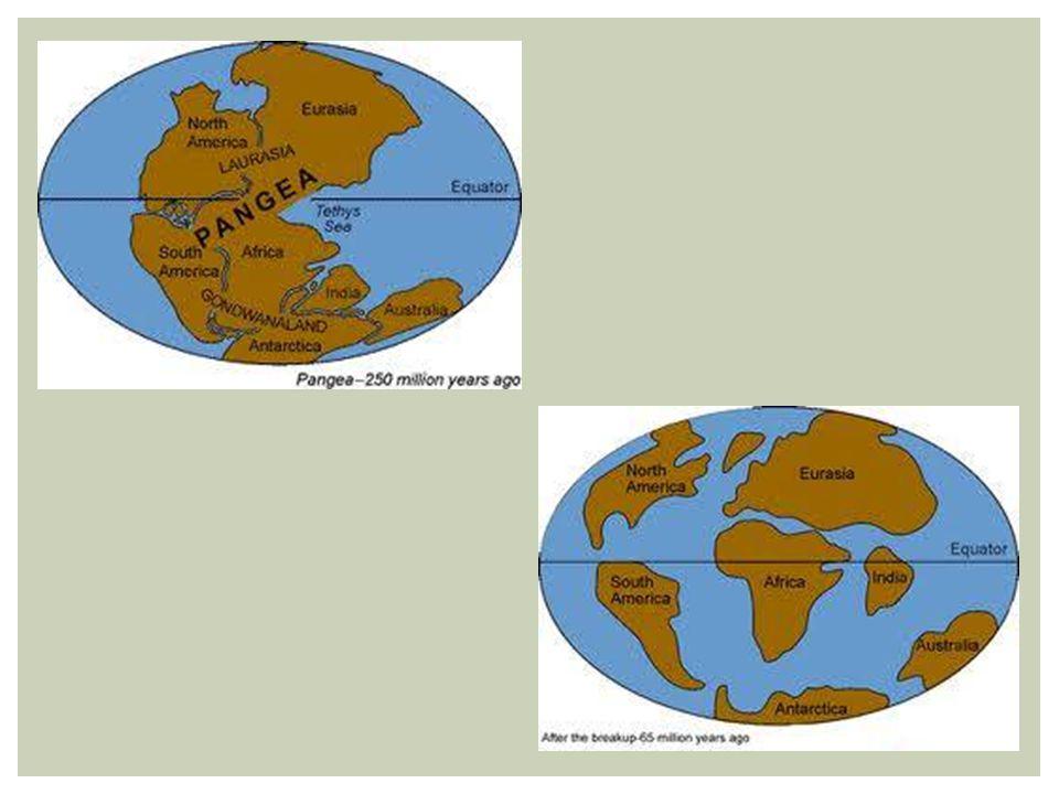 ► MESOZOICA CENOZOICA Provável colisão de um grande asteroide com a Terra levou à extinção de muitas espécies (dinossauros) Nova Era Glacial (esfriamento da Terra) Cratera de 320 Km de diâmetro (península de Yucatán – México)