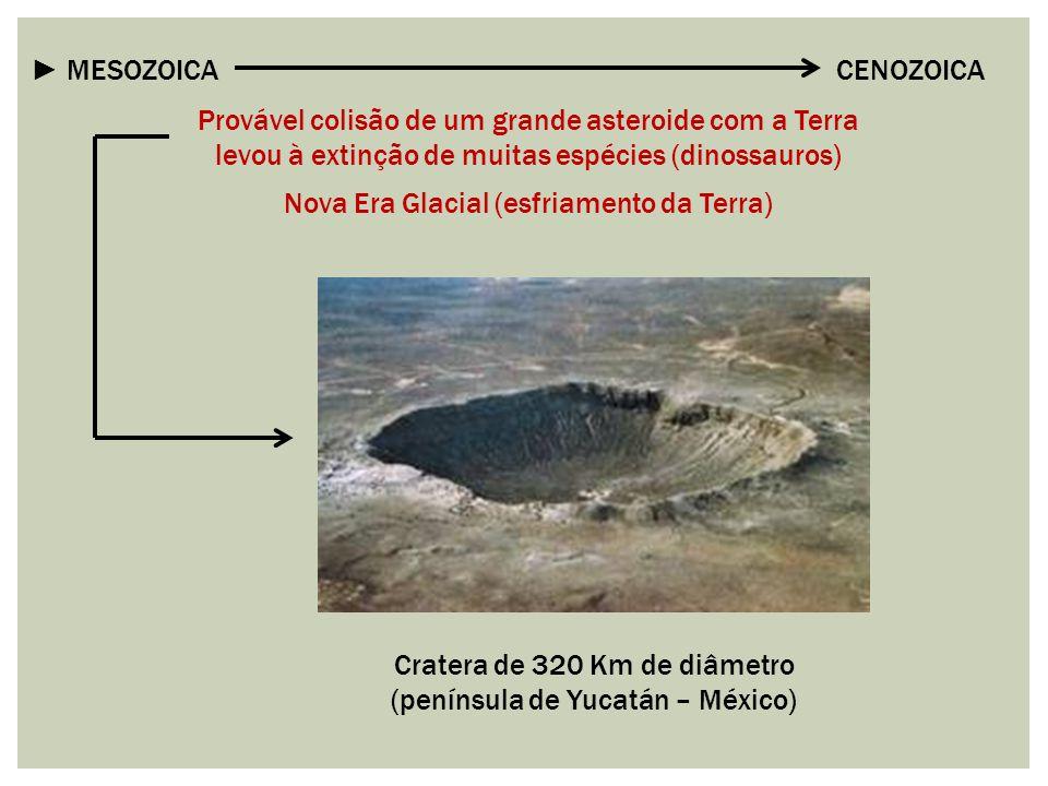 ► MESOZOICA CENOZOICA Provável colisão de um grande asteroide com a Terra levou à extinção de muitas espécies (dinossauros) Nova Era Glacial (esfriame