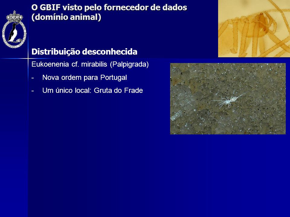 O GBIF visto pelo fornecedor de dados (domínio animal) Distribuição desconhecida Eukoenenia cf. mirabilis (Palpigrada) -Nova ordem para Portugal -Um ú