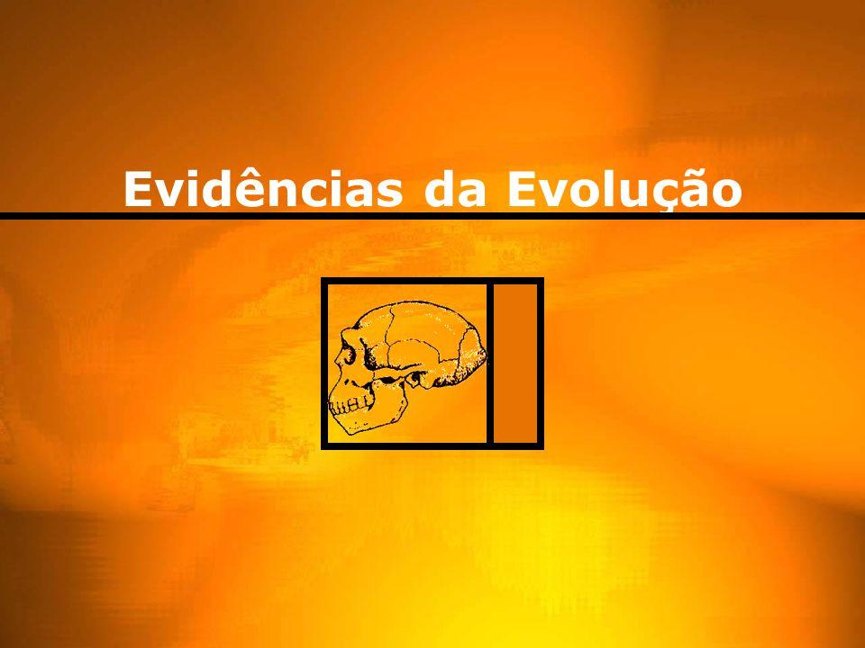 Explicações para diversificação CreacionismoAto sobrenatural fixismo Geração espontânea Vida matéria bruta TransmutaçãoUma espécie da origem a outra
