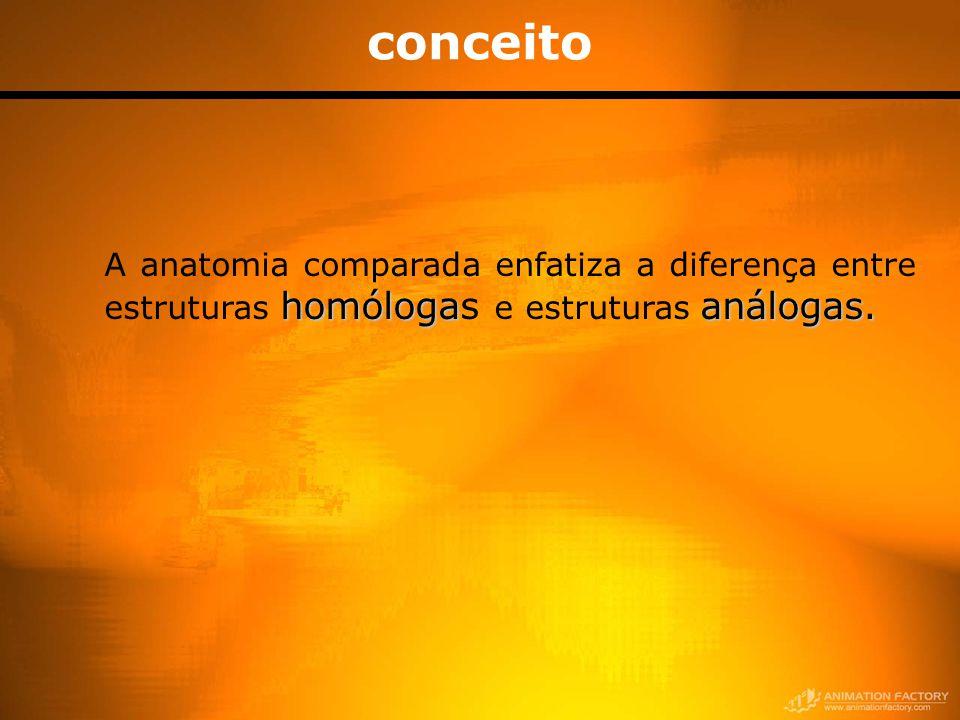 conceito homólogaanálogas. A anatomia comparada enfatiza a diferença entre estruturas homólogas e estruturas análogas.