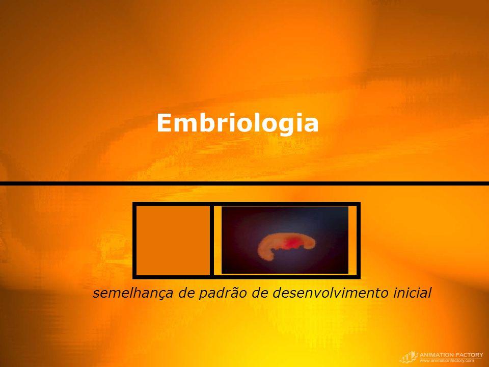 Embriologia semelhança de padrão de desenvolvimento inicial