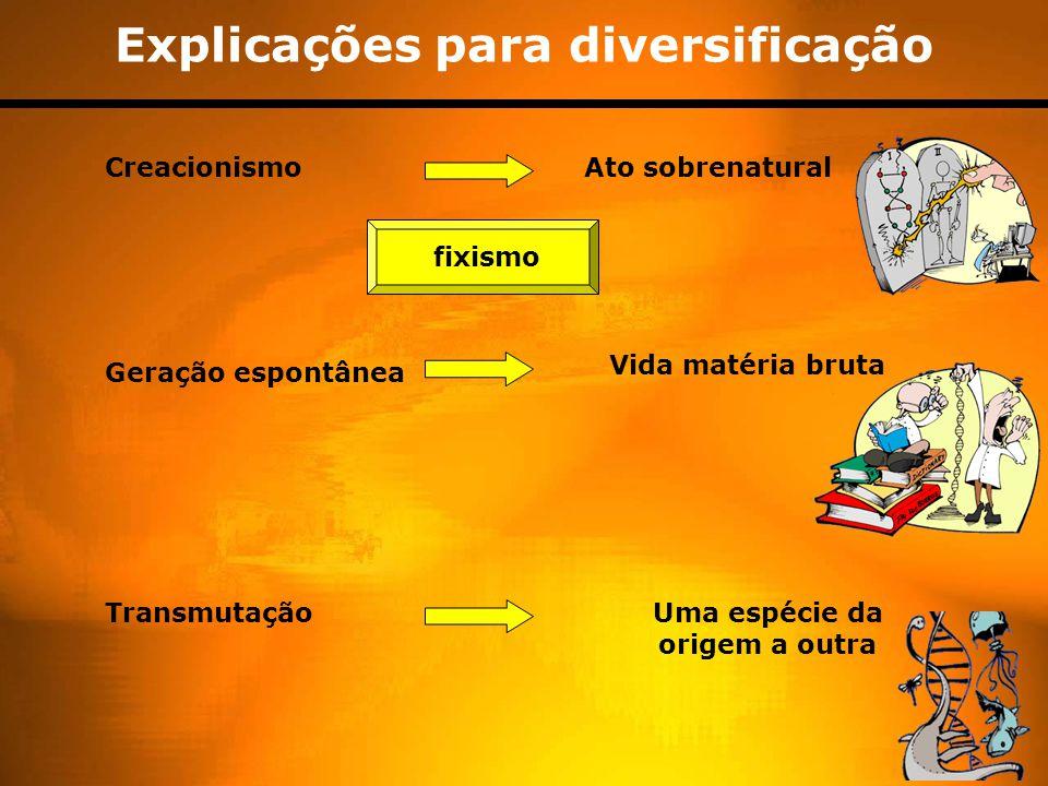 Evidências da evolução Fósseis ( paleontologia ) Taxonomia ( classificação dos s.v.