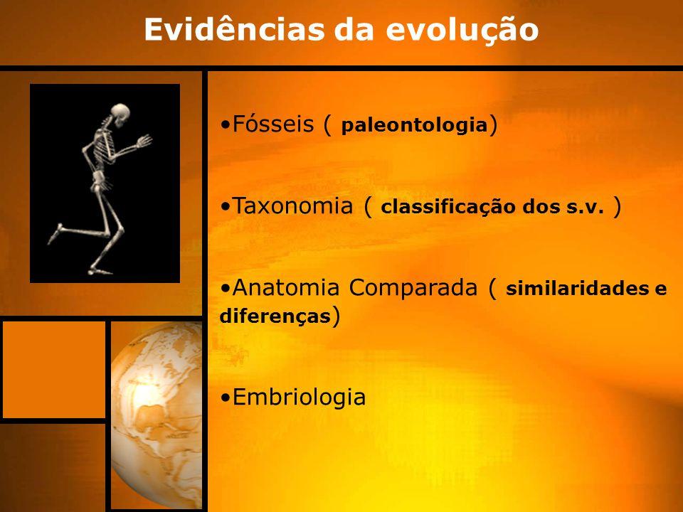 Evidências da evolução Fósseis ( paleontologia ) Taxonomia ( classificação dos s.v. ) Anatomia Comparada ( similaridades e diferenças ) Embriologia