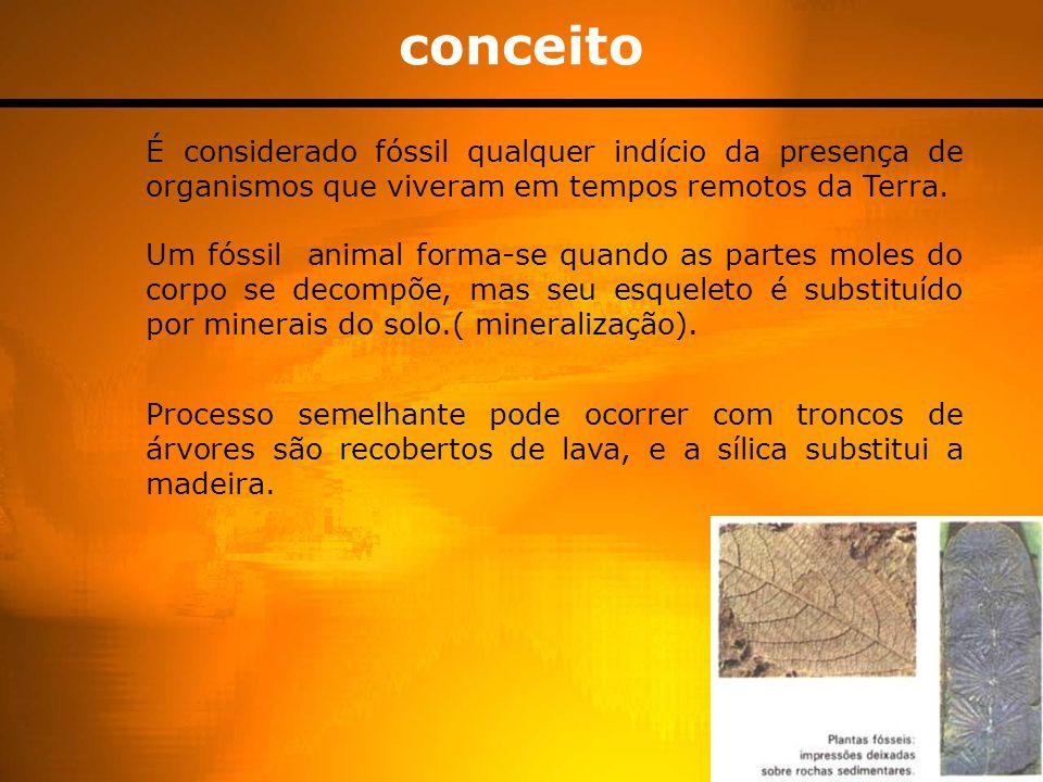 conceito É considerado fóssil qualquer indício da presença de organismos que viveram em tempos remotos da Terra. Um fóssil animal forma-se quando as p