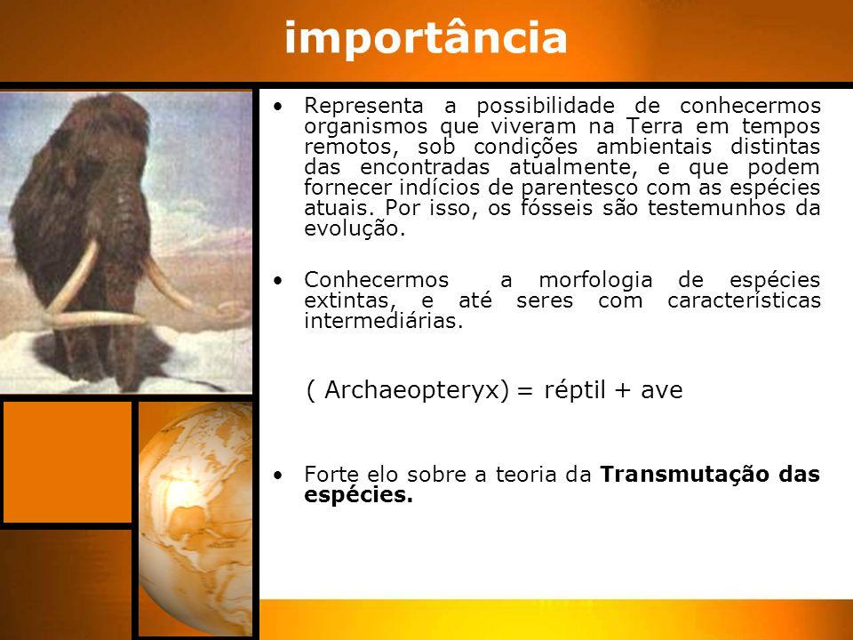 Taxonomia Classificação dos seres vivos