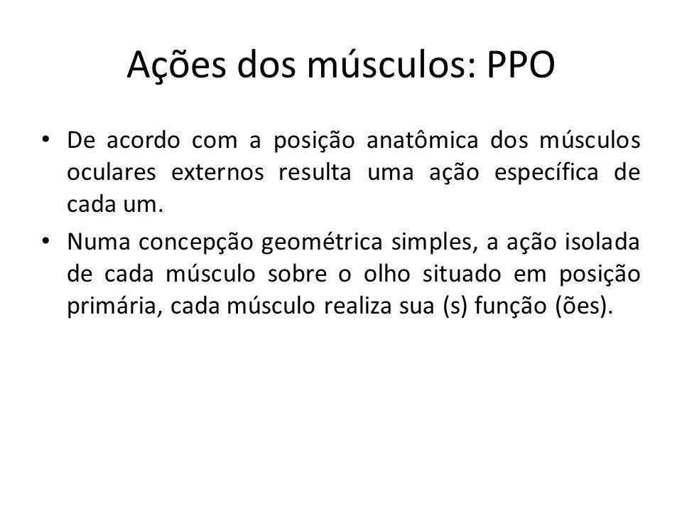 Ações dos músculos: PPO De acordo com a posição anatômica dos músculos oculares externos resulta uma ação específica de cada um. Numa concepção geomét
