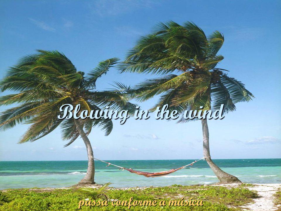 Blowing in the wind passa conforme a música