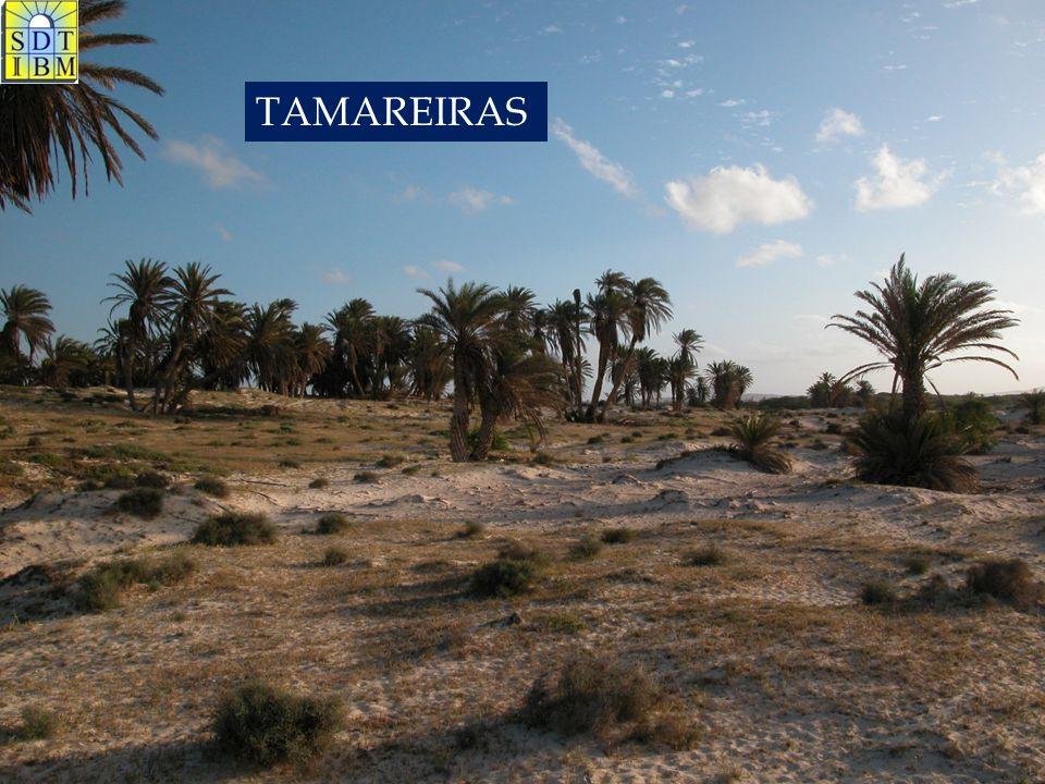 TAMAREIRAS