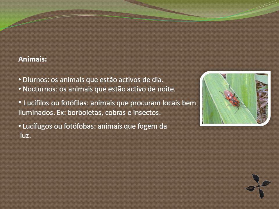 Animais: Diurnos: os animais que estão activos de dia.