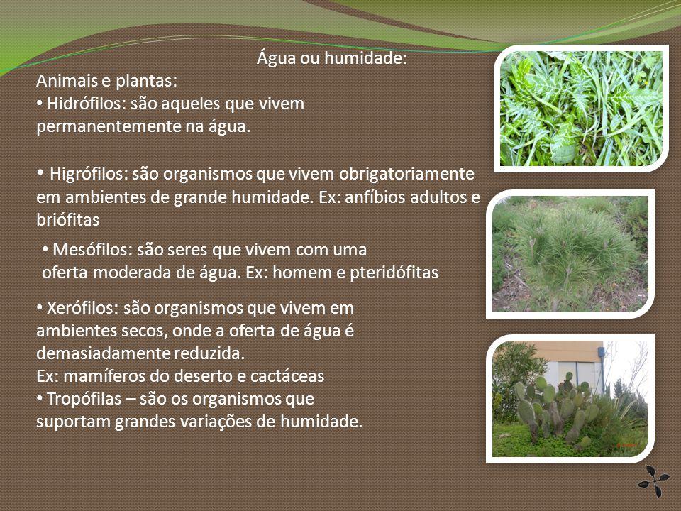 Água ou humidade: Animais e plantas: Hidrófilos: são aqueles que vivem permanentemente na água. Xerófilos: são organismos que vivem em ambientes secos