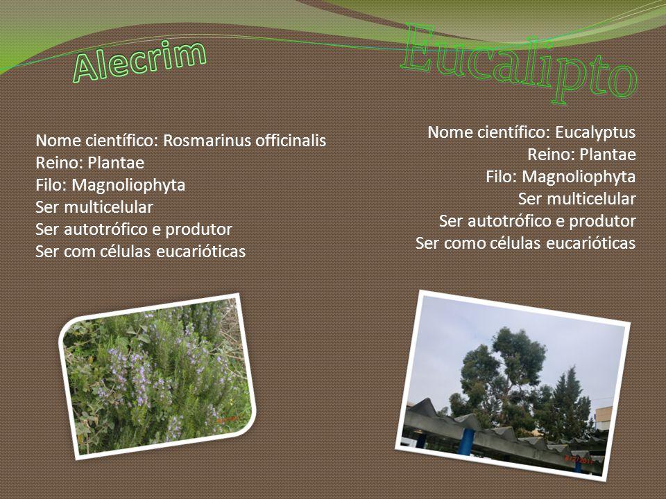 Nome científico: Rosmarinus officinalis Reino: Plantae Filo: Magnoliophyta Ser multicelular Ser autotrófico e produtor Ser com células eucarióticas No
