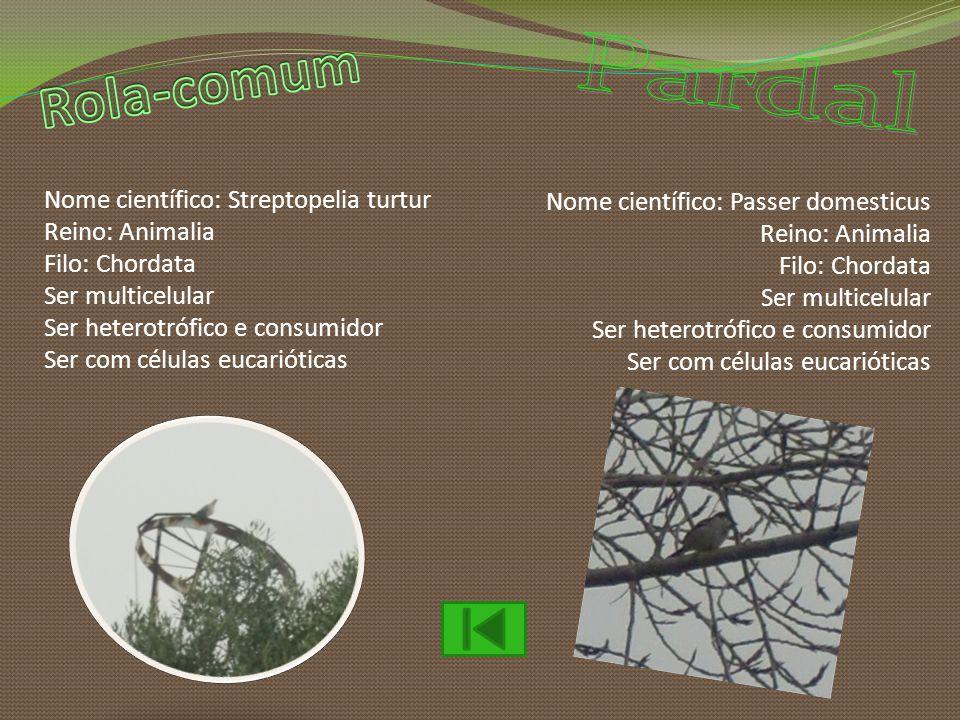 Nome científico: Streptopelia turtur Reino: Animalia Filo: Chordata Ser multicelular Ser heterotrófico e consumidor Ser com células eucarióticas Nome