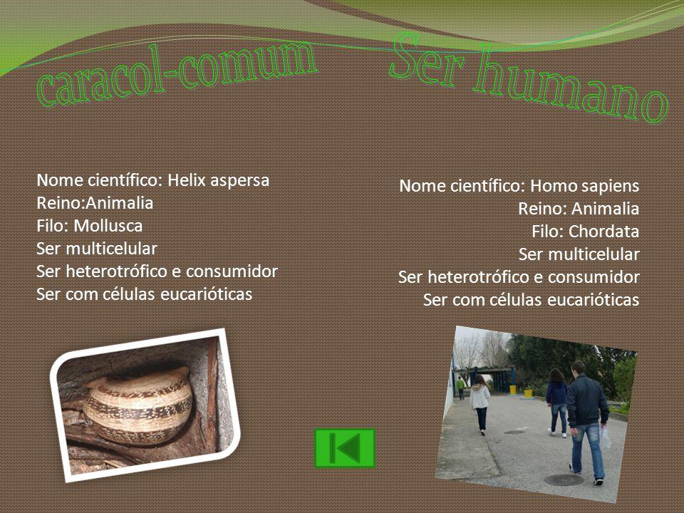 Nome científico: Helix aspersa Reino:Animalia Filo: Mollusca Ser multicelular Ser heterotrófico e consumidor Ser com células eucarióticas Nome científ