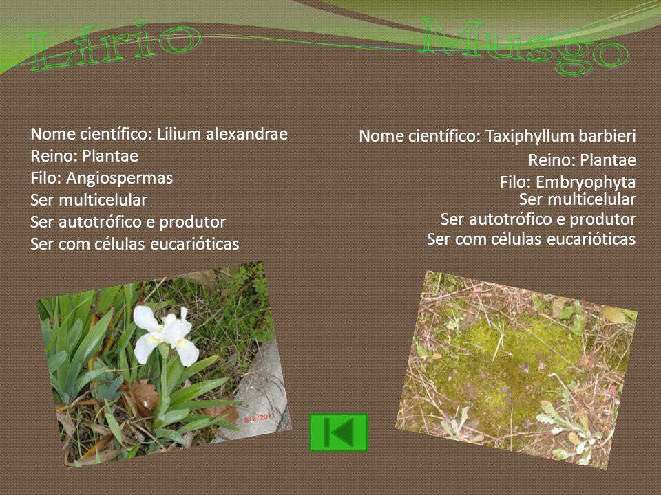 Nome científico: Lilium alexandrae Reino: Plantae Filo: Angiospermas Ser multicelular Ser autotrófico e produtor Ser com células eucarióticas Nome cie