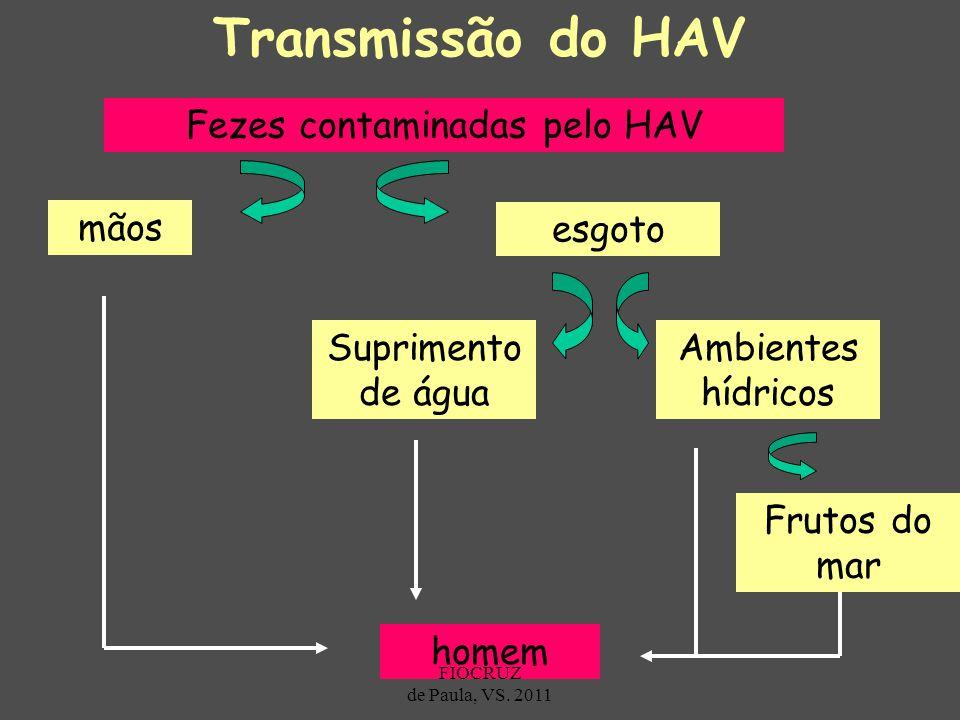 Transmissão do HAV Fezes contaminadas pelo HAV mãos esgoto Suprimento de água Ambientes hídricos Frutos do mar homem FIOCRUZ de Paula, VS. 2011